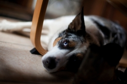 sam_sanders_photography_wigan_photographer_pet_dog_portrait_lifestyle_session_jpg_002