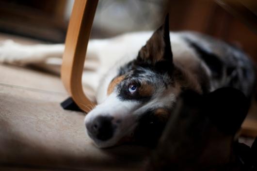 sam_sanders_photography_wigan_photographer_pet_dog_portrait_lifestyle_session_jpg_002