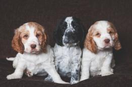 sam_sanders_photography_wigan_photographer_pet_dog_portrait_lifestyle_session_jpg_003