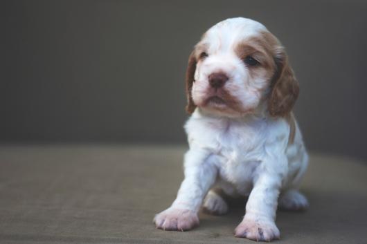 sam_sanders_photography_wigan_photographer_pet_dog_portrait_lifestyle_session_jpg_004