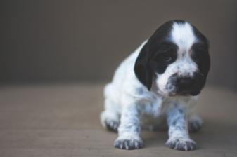 sam_sanders_photography_wigan_photographer_pet_dog_portrait_lifestyle_session_jpg_005