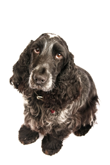 sam_sanders_photography_wigan_photographer_pet_dog_portrait_lifestyle_session_jpg_006