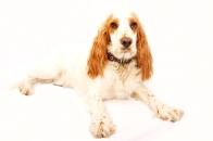 sam_sanders_photography_wigan_photographer_pet_dog_portrait_lifestyle_session_jpg_007