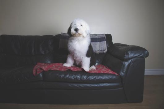 sam_sanders_photography_wigan_photographer_pet_dog_portrait_lifestyle_session_jpg_011