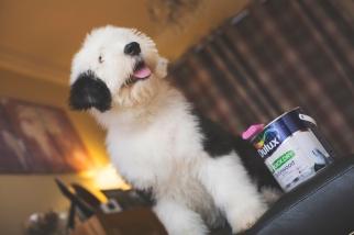 sam_sanders_photography_wigan_photographer_pet_dog_portrait_lifestyle_session_jpg_012