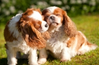 sam_sanders_photography_wigan_photographer_pet_dog_portrait_lifestyle_session_jpg_014