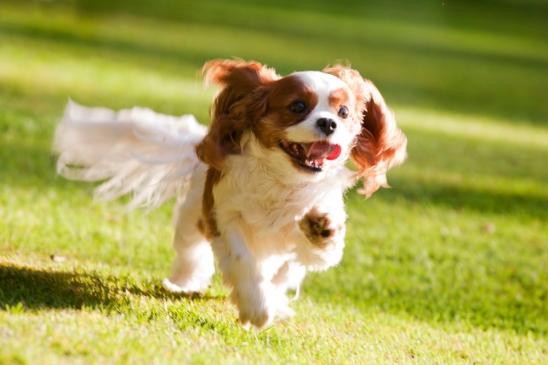 sam_sanders_photography_wigan_photographer_pet_dog_portrait_lifestyle_session_jpg_015